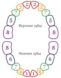 Схема зубов у детей